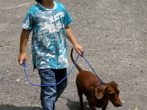 Uno de los perros ganadores 'Mini', un dachshund, con Felipe Alexander Grimaldos.