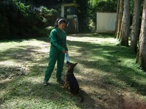 Indicaciones Para Cuidar Adeciadamente Un Perro