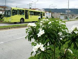 Metrolínea quiere entregar jardines a particulares.