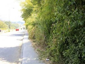 Algo similar sucede por el camino que lleva por toda la paralela cerca al conjunto Torres de Aragón.