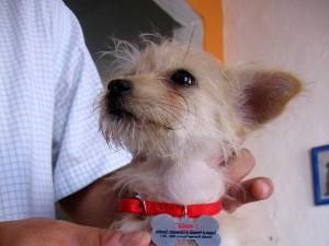 Jornada de adopción de mascotas