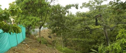 Cambuches del lote de Kalandaima fueron destruidos
