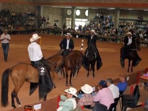 Con Exposicion equina comienza Agroferia 2011.