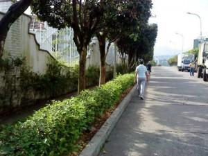 Al parecer el crecimiento de la zona verde hace más difícil el acceso al andén. (FOTOS Suministradas)