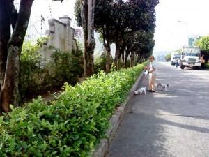 Es común ver peatones transitando por la vía.