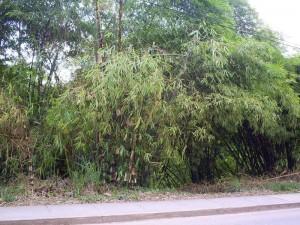 Está vía es utilizada como acceso acceso a los centros médicos de El Bosque.