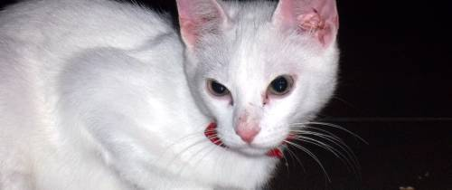 Gato fue encontrado en el sector