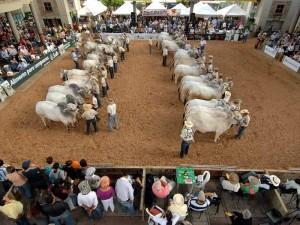 La Feria Ganadera estará en Cenfer del 10 al 18 de septiembre. (FOTOS Archivo)