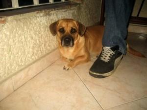 La perrita se perdió desde el pasado 20 de julio. (FOTO Suministrada)