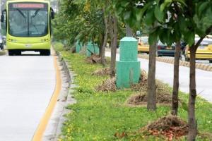 Los separadores de Metrolínea por la zona de El Bosque lucen en buen estado.