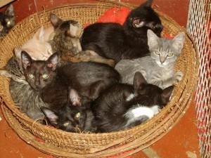 Jornada de adopción de mascotas.