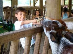 Algunos institutos también tienen como opción paseos ecológicos como las caminatas y actividades de campo con animales para menores entre los 6 a 12 años.