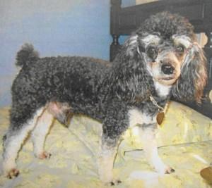 Este perro está perdido desde el puente de Reyes Magos.