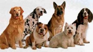 Dueños de mascotas incomodan a los habitantes de Cañaveral por el manejo irresponsable de sus animales.