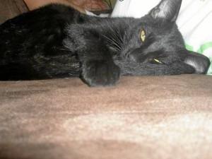 Beckam también desapareció en extrañas circunstancias el mismo año que 17 gatos más fueron envenenados o encontrados destrozados.
