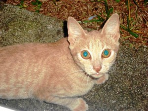 Kena era la gatica de Marta Sánchez que fue encontrada el pasado 4 de enero.