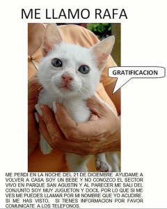 Rafa es otro de los gaticos que jamás regresó a casa.