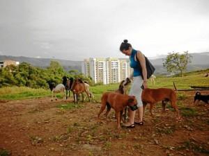 Fernanda tiene sólo 19 años y con un grupo de amigas recoge animales abandonados, en muchos casos en terribles condiciones de salud, los rehabilita y les consigue hogar.