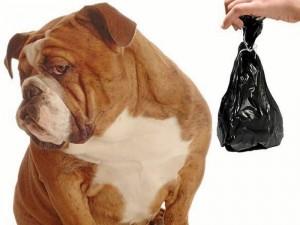 """""""Es necesario que seamos más conscientes y recojamos los desechos de nuestras mascotas. Es importante que pensemos en los demás""""."""