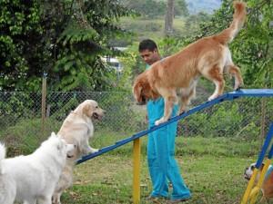 Yesid Rodríguez Pabón aparece en la foto con uno de los perros entrenados que atraviesa uno de los obstáculos del programa Agility.