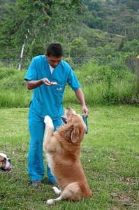 En esta fotografía muestra cómo el perro se sienta tras la orden que le da su entrenador.