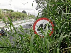 La falta de mantenimiento del talud es tan evidente que incluso pareciera que la naturaleza se abrirá paso hasta este importante tramo vial.  Fotos: Javier Gutiérrez
