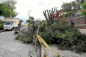Los vecinos manifestaron que de no ser por la intervención de varias personas la poda hubiera seguido afectando a otros árboles.