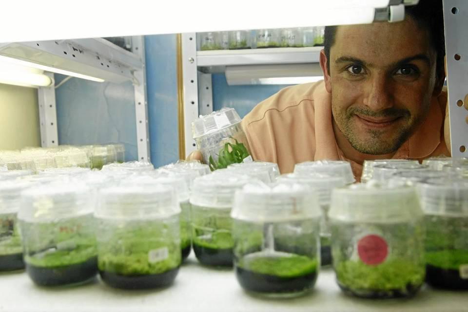 El ingeniero español Eliseo Esson es el encargado de la reproducción in vitro de las orquídeas. César Flórez / GENTE DE CAÑAVERAL