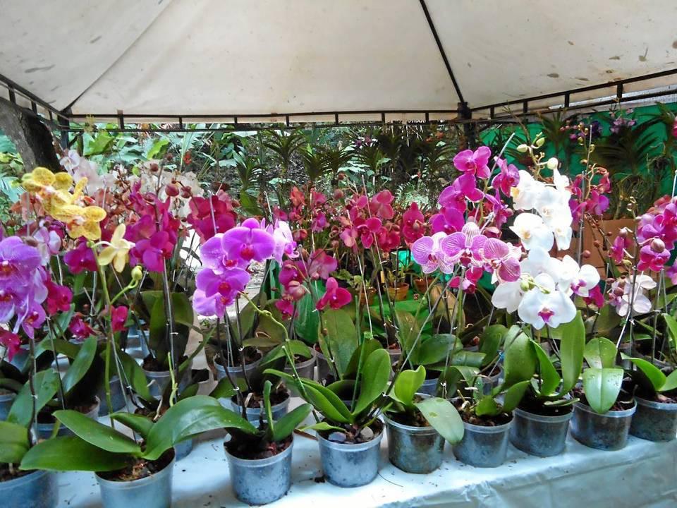 Orquideas jardin botanico bogota for Jardin botanico 2016