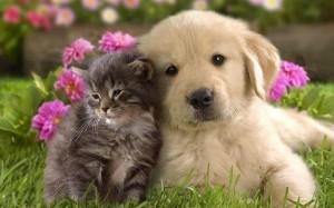 Se teme que el veneno destinado a las mascotas caiga en manos de niños y ocasione una tragedia. - Imagen tomada de internet / GENTE DE CAÑAVERAL