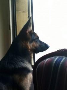 Rocco tiene 14 meses. - Suministrada / GENTE DE CAÑAVERAL