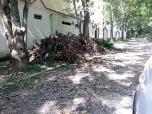 Los árboles son podados y las ramas quedan por varios meses en este punto, lo que dificulta la circulación de peatones.  - Imagen Suministrada/ GENTE DE CAÑAVERAL
