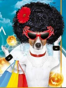 Los interesados pueden inscribir a sus mascotas en los días previos a la premiación del mejor disfraz.  - Imagen suministrada /GENTE DE CAÑAVERAL