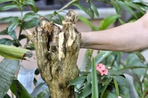 Esta habitante pide control sobre las plantas del conjunto.  - Laura Herrera / GENTE DE cAÑAVERAL