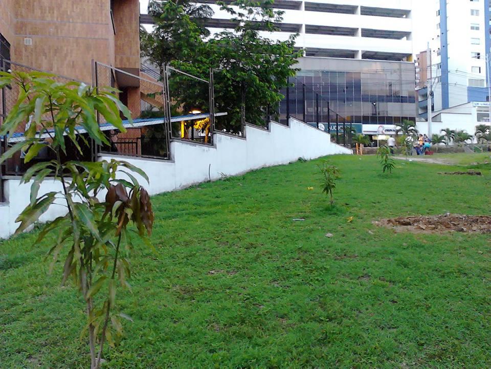 Estos son algunos de los árboles que fueron plantados por la comunidad. En estos momentos no saben qué pasará por la nueva obra.  - N.A