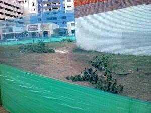 Estos fueron los árboles que fueron talados.  - Suministrada/GENTE DE CAÑAVERAL