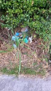 Este es el rincón donde se acumulan los residuos. - Suministrada/GENTE DE CAÑAVERAL