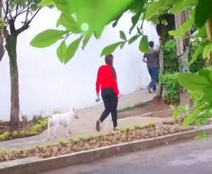 La comunidad pide control para las mascotas.  - Suministrada/GENTE DE CAÑAVERAL