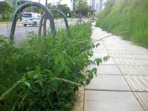 La comunidad pide mantenimiento para las zonas verdes. - Suministrada/GENTE DE CAÑAVERAL