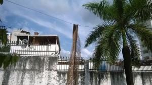 Estas son las palmas que pegan con los cables.  - Suministrada/GENTE DE CAÑAVERAL