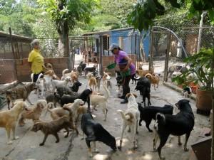 Los estudiantes esperan la participación de la comunidad de Bucaramanga y el área metropolitana.  - Archivo/GENTE DE CAÑAVERAL