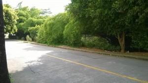 Los peatones no pueden caminar por falta de poda.  - Suministrada/GENTE DE CAÑAVERAL