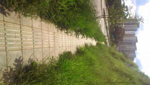 Con las lluvias de las últimas semanas la maleza ha crecido.  - Suministrada/GENTE DE CAÑAVERAL