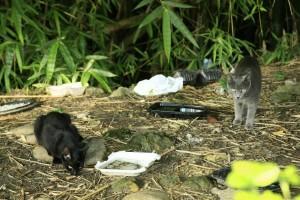 Un veteriniario del sector asegura que este ha sido un problema de siempre, pero que trabaja por controlar la población de felinos.  - César Flórez /GENTE DE CAÑAVERAL