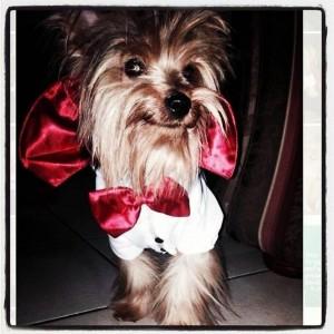 Este era 'Timmy', quien según su dueña fue atacado por un Bull Terrier que vive en su conjunto.  - Suministrada/GENTE DE CAÑAVERAL