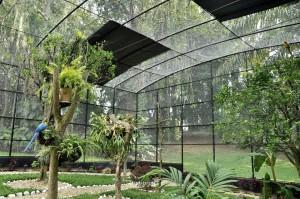 Por lo menos 200 aves pueden vivir cómodamente en este espacio construido para ellas.  - Laura Herrera /GENTE DE CAÑAVERAL