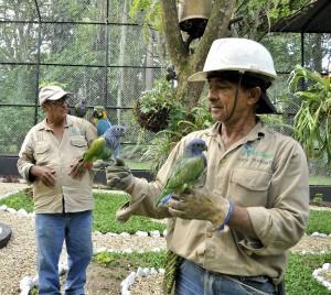 Las aves tendrán control permanente en su alimentación, por parte de personal especializado. - Laura Herrera /GENTE DE CAÑAVERAL