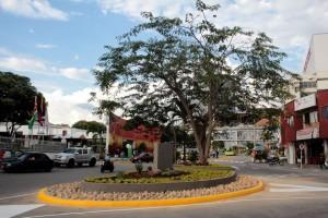 El árbol que está en medio de la nueva glorieta fue conservado, alrededor fueron sembradas varias plantas.  - Javier Gutiérrez / GENTE DE CAÑAVERAL