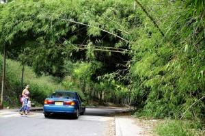Así se ve la vía en este momento, la comunidad pide más mantenimiento por seguridad. - Didier Niño Carvajal/GENTE DE CAÑAVERAL