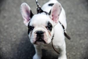 Se hace un llamado a los propietarios de mascotas, para que la tenencia implique también responder con los deberes que les compete como dueños.  - Banco de imágenes/ GENTE DE CAÑAVERAL